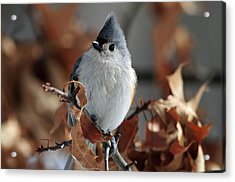 The Titmouse Acrylic Print by Mike Martin