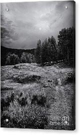 The Trail Acrylic Print by David Waldrop
