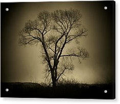 The Tree Acrylic Print by Big E Photography