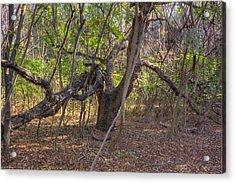 The Tree End Of Life Acrylic Print