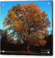 Acrylic Print featuring the photograph The Tree Of Life by Davandra Cribbie