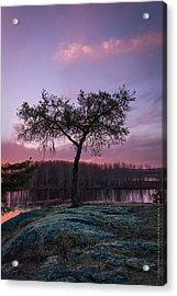 The Tree Of Life Acrylic Print by Dustin Abbott