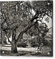 The Tree Which Moves ... Acrylic Print by Gwyn Newcombe