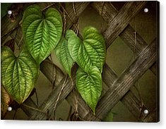 The Trellis Acrylic Print