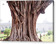 The Twisted And Gnarled Stump And Stem Of A Large Tree Inside The Qutub Minar Compound Acrylic Print by Ashish Agarwal