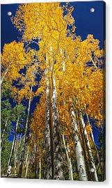 The Two Split Trees Acrylic Print by Mitch Johanson