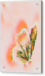 The Vibes Of A Butterfly's Mind Acrylic Print by Li   van Saathoff