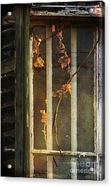 The Vine Inside Acrylic Print by Sari Sauls