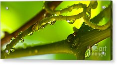 Acrylic Print featuring the photograph The Vineyard After The Rain by Artist and Photographer Laura Wrede