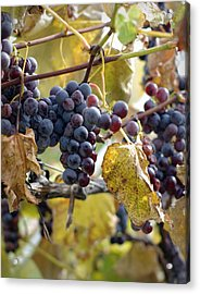 Acrylic Print featuring the photograph The Vineyard by Linda Mishler