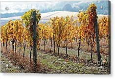 The Vineyard Acrylic Print by Margaret Hood