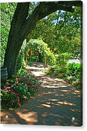 The Vineyard Walk Acrylic Print