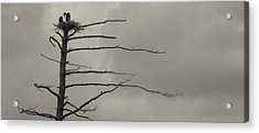 The Vulture Tree Acrylic Print by Artist Orange