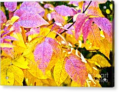The Warm Glow In Autumn Abstract Acrylic Print by Andee Design
