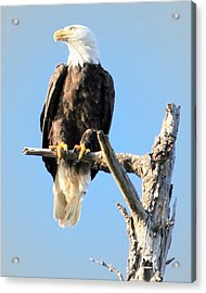 The Watcher Acrylic Print by Dorothy Hilde
