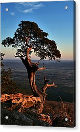 The Weathered Watcher Acrylic Print by Jeff Rose