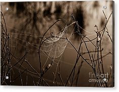 The Web Acrylic Print by John Stanisich