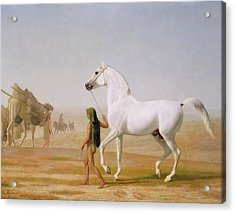 The Wellesley Grey Arabian Led Through The Desert Acrylic Print by Jacques-Laurent Agasse