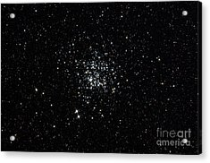 The Wild Duck Cluster Acrylic Print by Rolf Geissinger