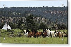 The Wild Mustangs In The Black Hills Acrylic Print