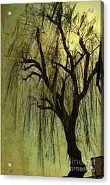 The Willow Tree Acrylic Print by Susanne Van Hulst