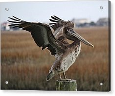 The Wind Beneath My Wings Acrylic Print by Paulette Thomas