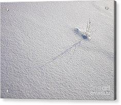 The Winter Minimum Acrylic Print by Odon Czintos