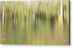 Acrylic Print featuring the photograph The Woods by Penny Meyers