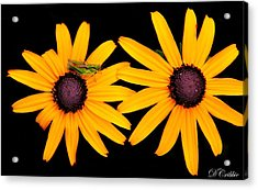 Acrylic Print featuring the photograph The Yellow Rudbeckia by Davandra Cribbie