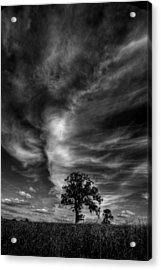 Acrylic Print featuring the photograph There Can Only Be One by John Chivers