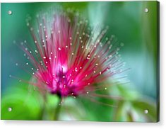 There Weren't Enough Words For The Colors. Acrylic Print by Laura George