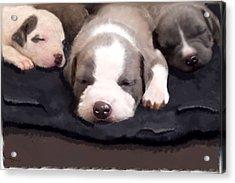 They Call It Puppy Love Acrylic Print by Angel Pachkowski