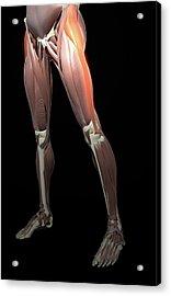 Thigh/lower Limb Abduction Acrylic Print by MedicalRF.com