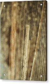 Thin Veil Acrylic Print by Todd Sherlock