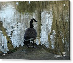 Acrylic Print featuring the photograph Thinking Of You by Katy Mei