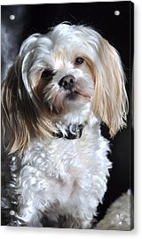 This Guy's My Best Friend Acrylic Print by Lisa  DiFruscio