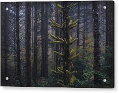 This Is British Columbia No.54 - Misty Mystical Moss Forest II Acrylic Print by Paul W Sharpe Aka Wizard of Wonders