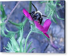 This Is My Flower Acrylic Print by Becky Lodes