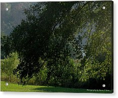 Acrylic Print featuring the photograph This Ole Tree by Maria Urso