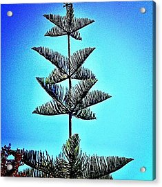 This #tree Has A Lot To Acrylic Print