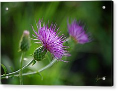 Acrylic Print featuring the photograph Thistle Dance by Vicki Pelham