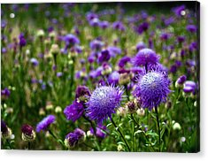 Thistle Field Acrylic Print by Tamyra Ayles