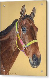 Thoroughbred Acrylic Print
