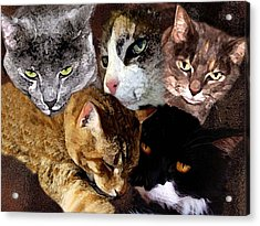 Those Cats Acrylic Print by Darlene Freas