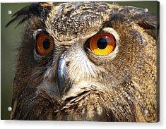 Those Eyes Acrylic Print by Paulette Thomas