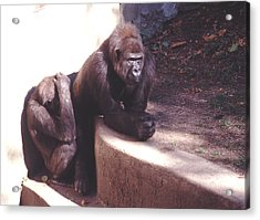 Acrylic Print featuring the photograph Thoughtful Gorilla With Child by Tom Wurl