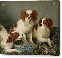 Three Cavalier King Charles Spaniels On A Rug Acrylic Print by English School