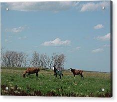 Three Horse Ranch Acrylic Print by Brian  Maloney