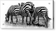 Acrylic Print featuring the photograph Three In A Row by Jacqi Elmslie