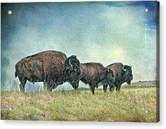Three In A Row Acrylic Print by Tamyra Ayles
